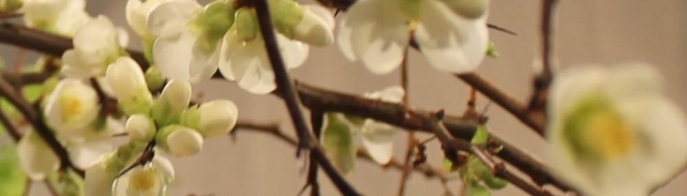 floweracademy.se